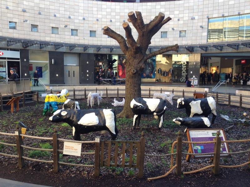 MK 08 Cows